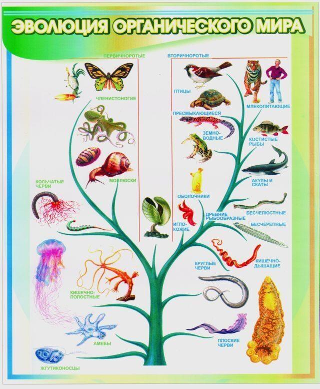 Safety Assessment of Transgenic Organisms